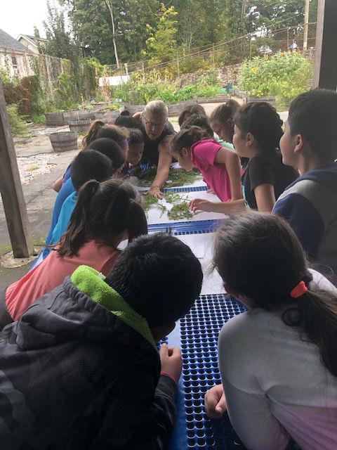 Children huddled around a table examining plants.
