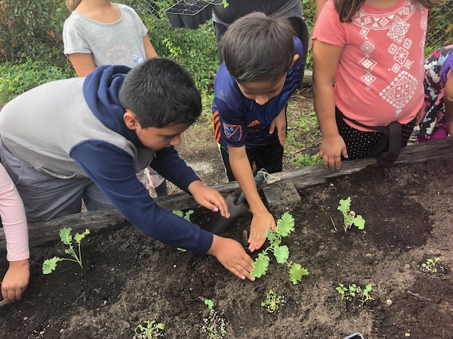 Two boys setting a plant in the soil together.