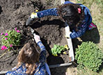 two girls dig in the garden at WPES